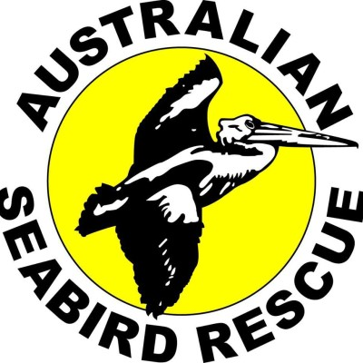 australian-sea-bird-rescue-06