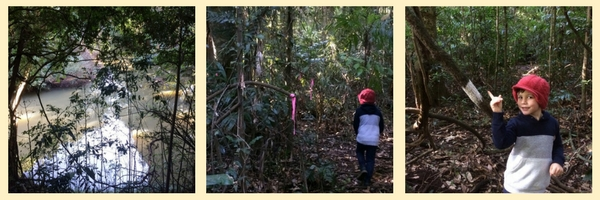 Booyong Rainforest Reserve Pink Ribbon Loop